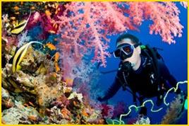 Viajes a Punta cana - Admiré la belleza de los corales de Puntacana.