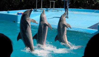 Show de delfines en Manatí Park