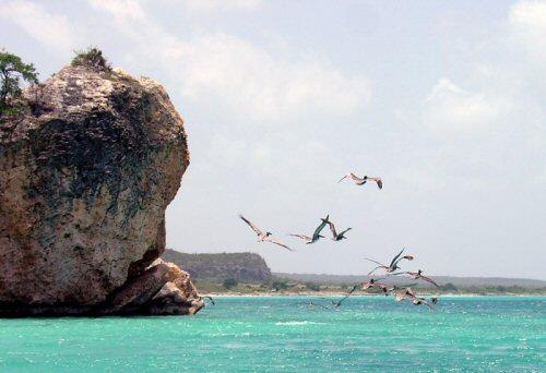 Bahia De Las Aguilas: Pelicanos en las Cuevas.